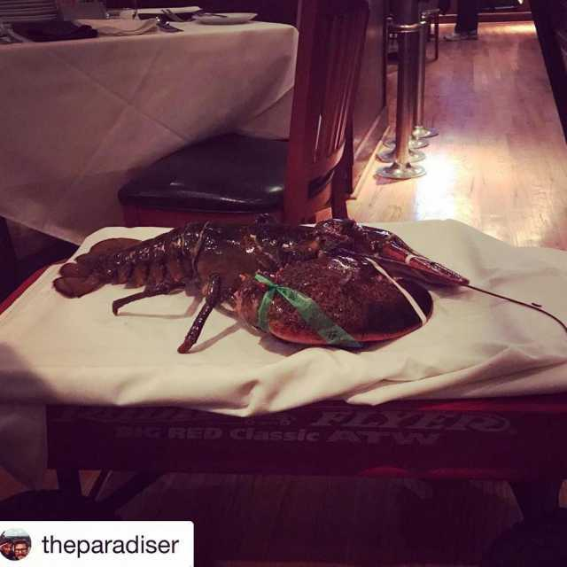 Repost theparadiser with getrepost  115 lbs Lobster! Good nighthellip